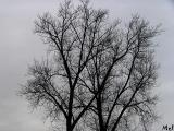 Look A tree up in the sky.jpg(101)