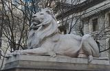 Lion in front of the New York Public Library