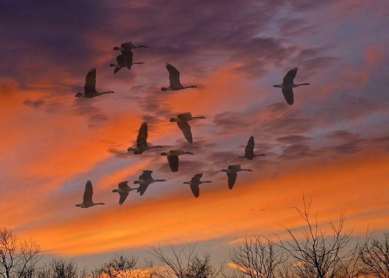 Sunset Migration  (Composite)