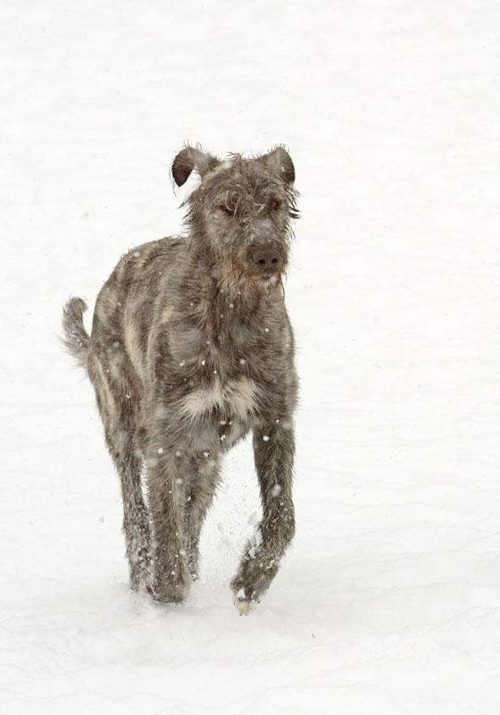 zoy in the snow.jpg