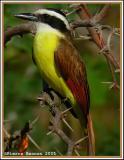 Les oiseaux de Huatulco, Mexique