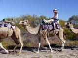 Cammel Ride - Kalbarri