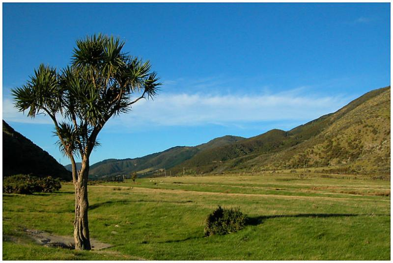 6 March 04 - Cabbage Tree and Valley