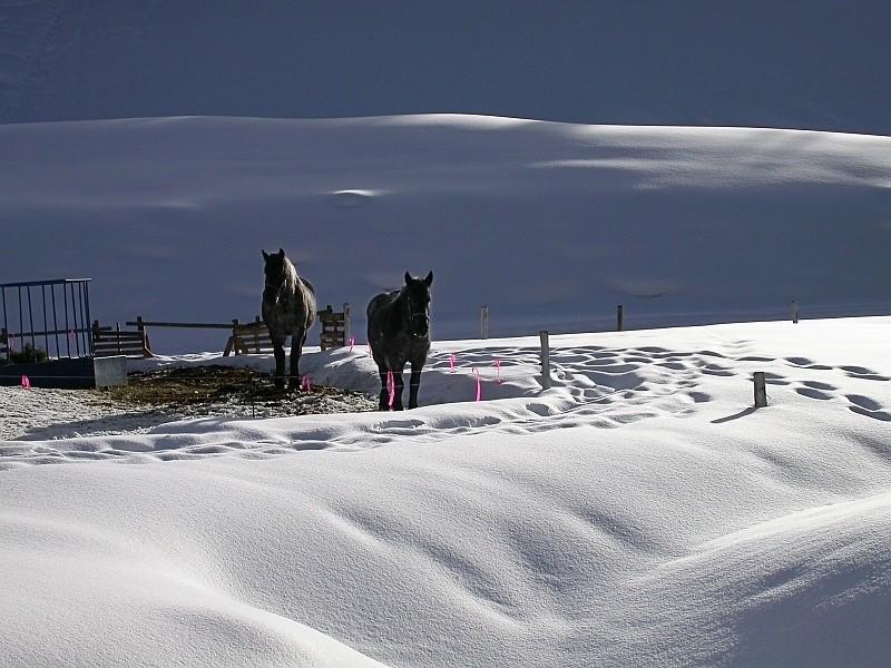 Working Horses.jpg