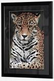 Jaguar Print Framed and Matted 16 x 24
