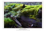 mossy log & sapling
