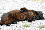 Cat rolling.jpg
