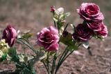 Sun-Washed Flowers.jpg