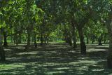 IMG09988 orchard.jpg