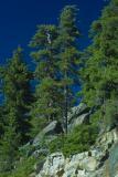 IMG10064 trees.jpg