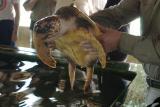Turtle Station