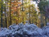 Catskill Mountains 2