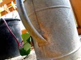 watering can 1.jpg