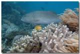 Whitsunday Fish life