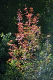 First sign of autumn 2004 DSC_0075.jpg