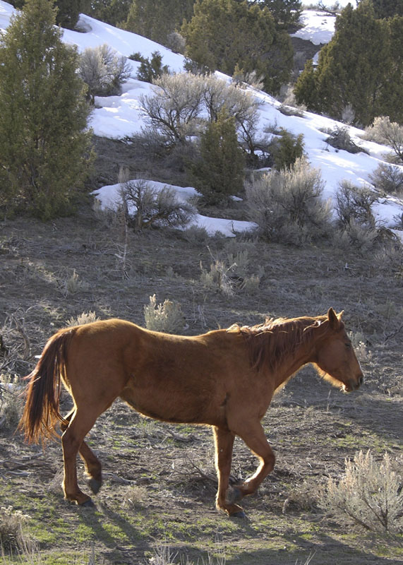Horse in Arbon Valley DSCN0220.jpg