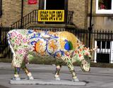 Cows Week