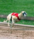 March 2004 Greyhound Preliminaries In Lorena