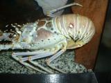 One more of the molluscs, Sea World, Orlando, FL