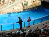 Otter and Sea Lion, Sea World, Orlando, FL