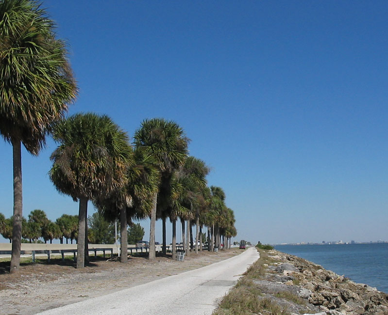 Palm trees line up the coast, Tampa