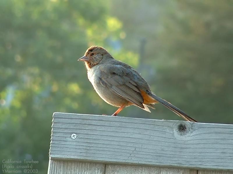 Avian Alarm Clock