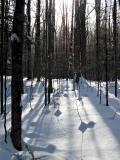 snow_trees2_ps_4w.jpg