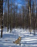 snowy_gull_pond_walk_4w.jpg