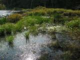2004-09-25: Puffer Pond Transect