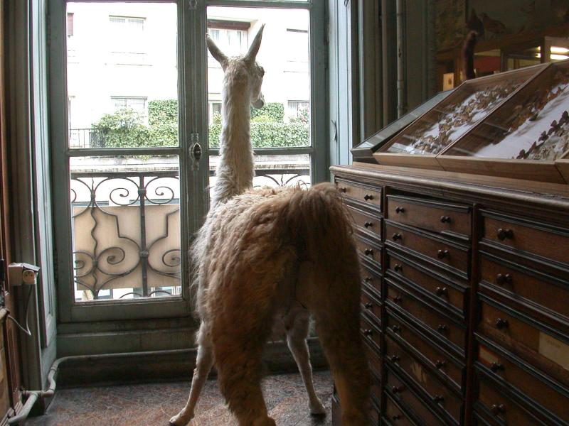 How much is that llama in the window?