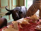 Bull in a china shop (along with a few zebras)