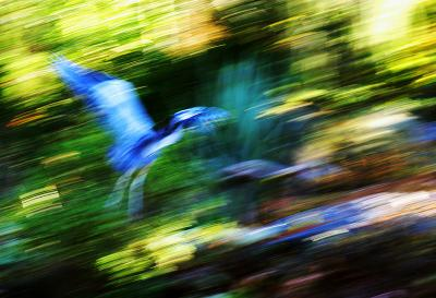 Fly with Me, Vandusen Botanical Gardens, Vancouver, Canada, 2003