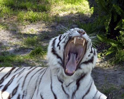 Busch Gardens, Tampa, FL March 2005 photo safari