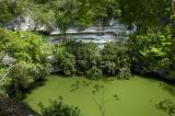 Entrance to the Underworld - The Sacred Cenote 6512