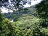 Yan Ming mountain garden
