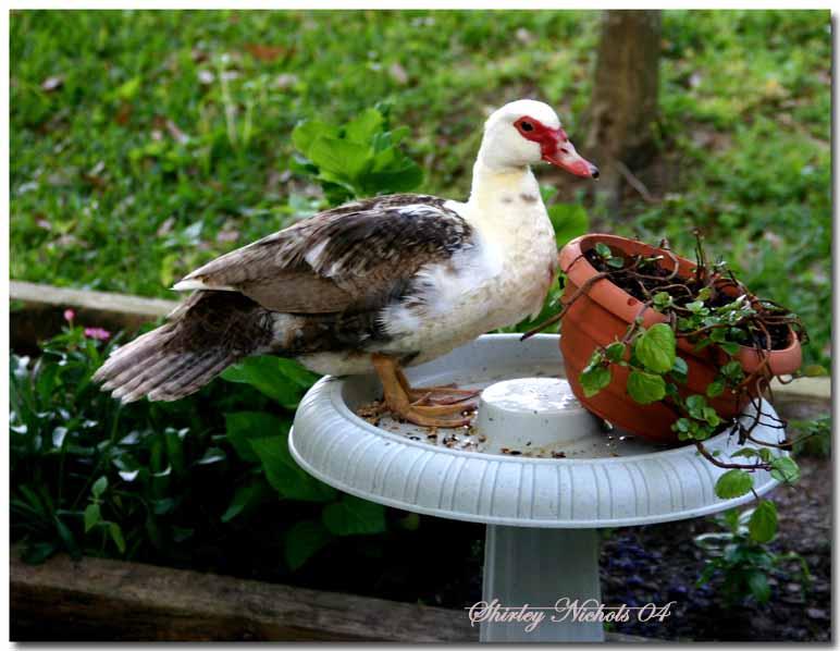 My bird bath.jpg