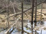Beaver activity, Otter Creek