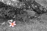 Fort Canning Park: 04 Apr 2004