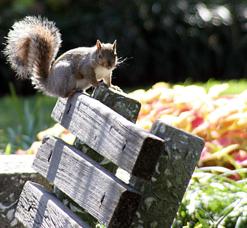 Squirrel on a bench