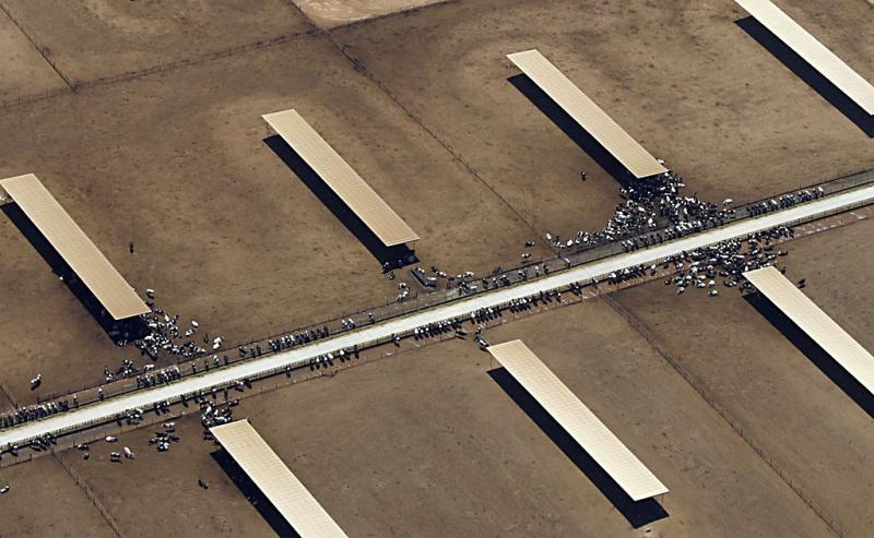 Intensive farming, California