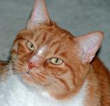 the smallest feline is a masterpiece -  Leonardo da Vinci