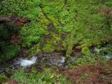 Lush Wash Creek