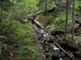 Wash Creek Headwaters
