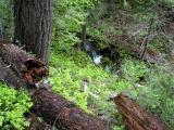 Wash Creek