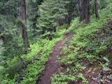 Forest Trail Ascending