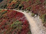 Trail Amid Hillside Foliage