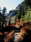Trail through Shadows