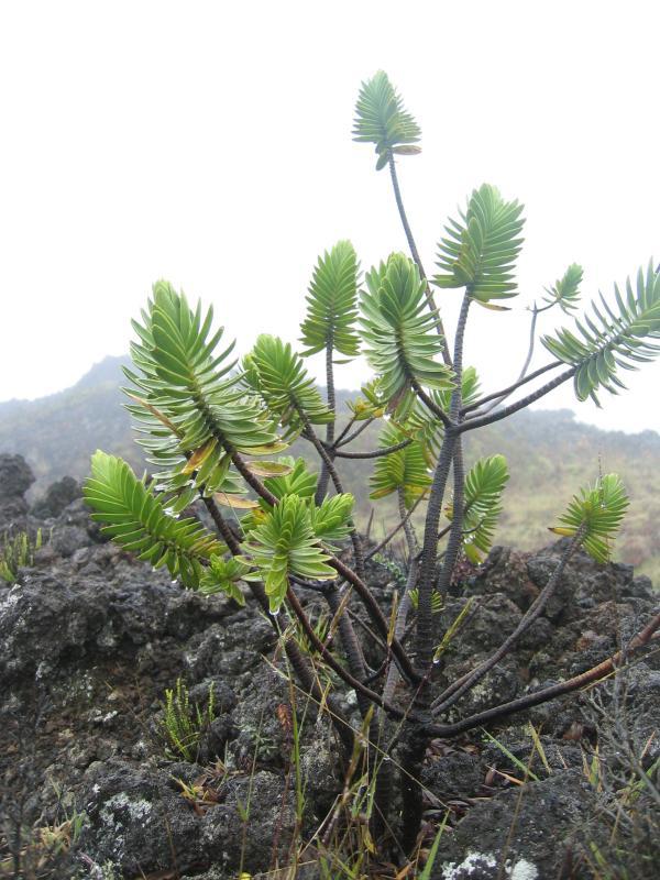 Haleakala0038