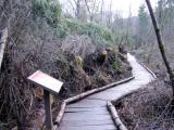 Root wad wall