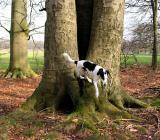 Joop's Dog Log - Sunday Mar 21